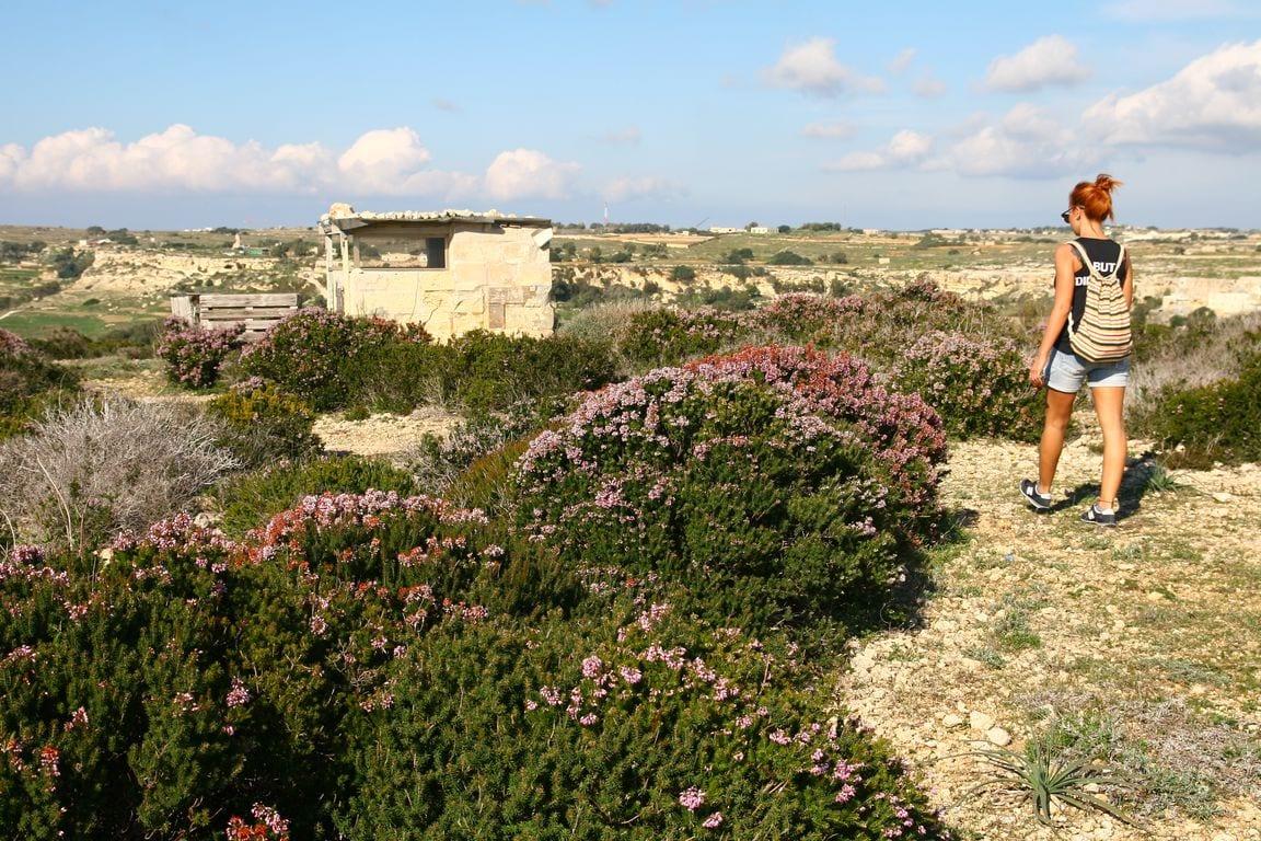 zielona Malta zimą
