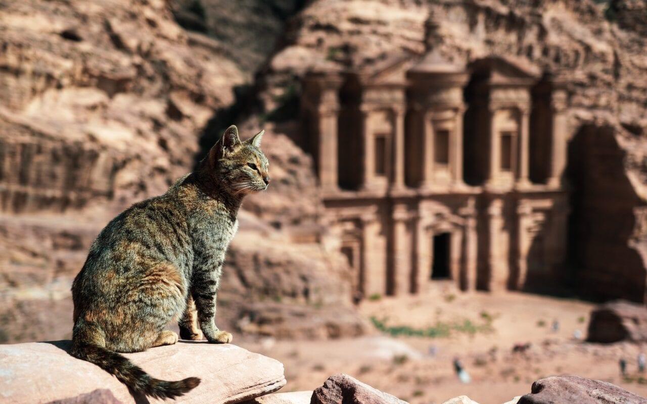 kot w Petrze
