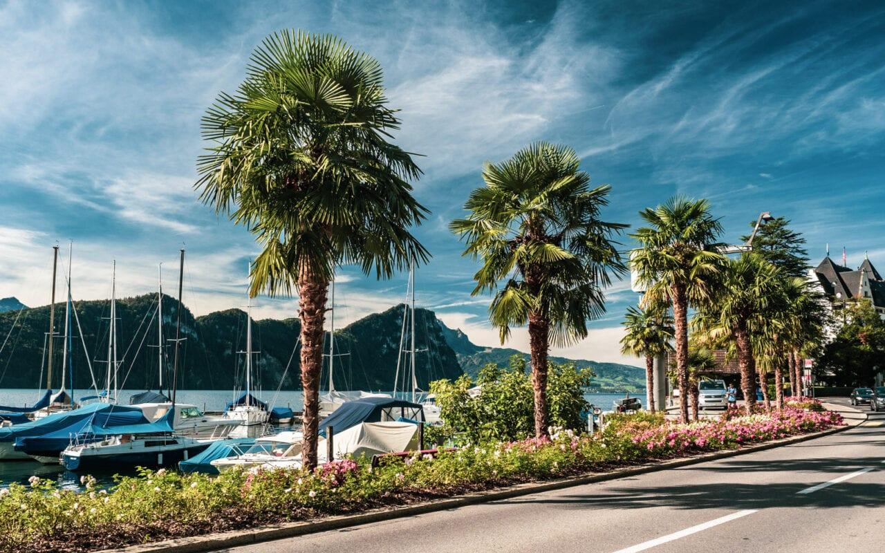 szwajcaria-palmy-widok