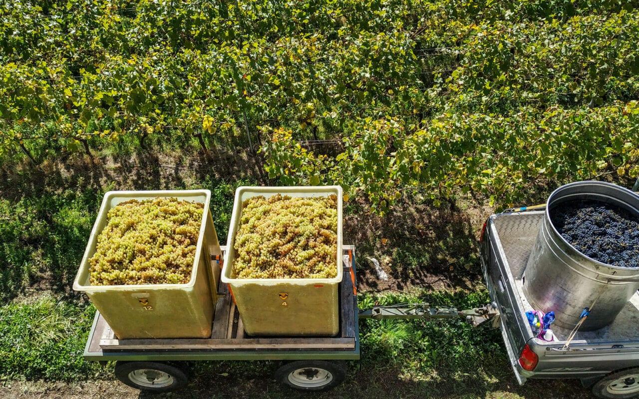 szwajcaria-ceny-wina