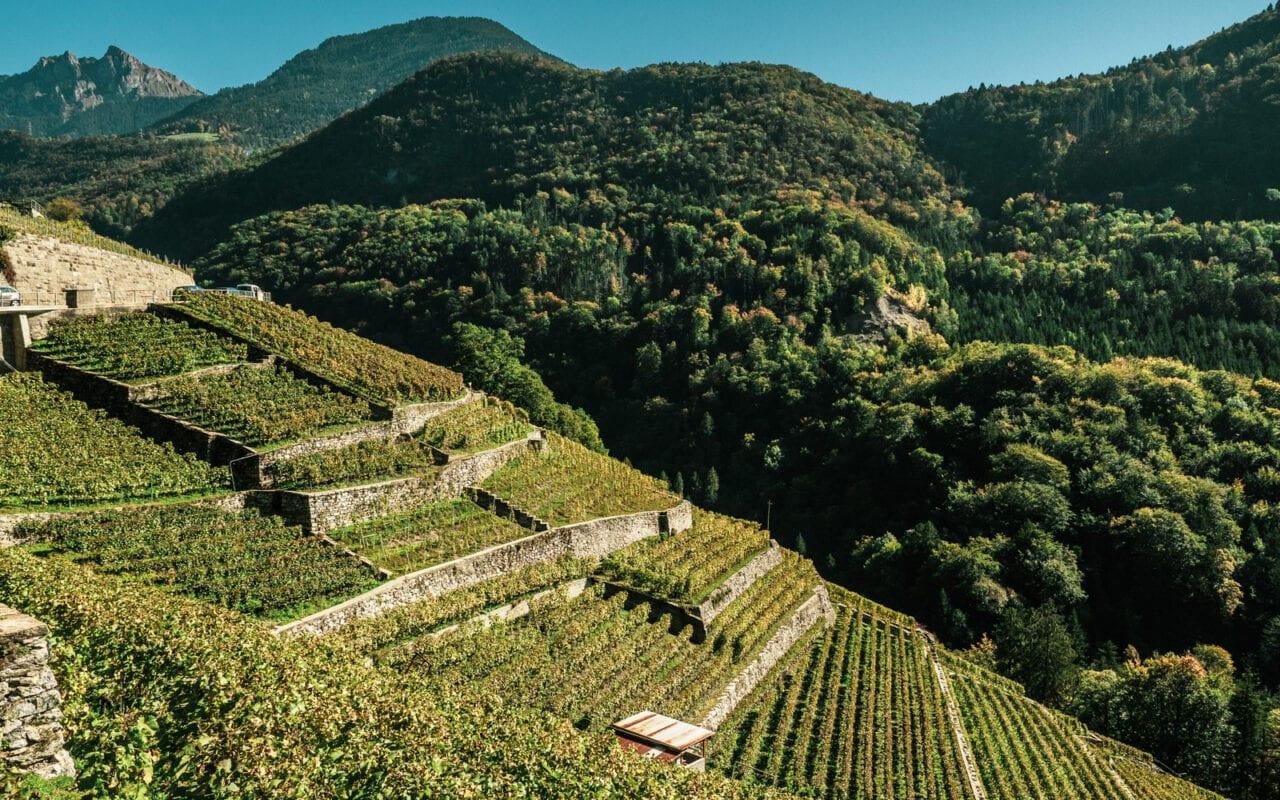 szwajcaria-winnice