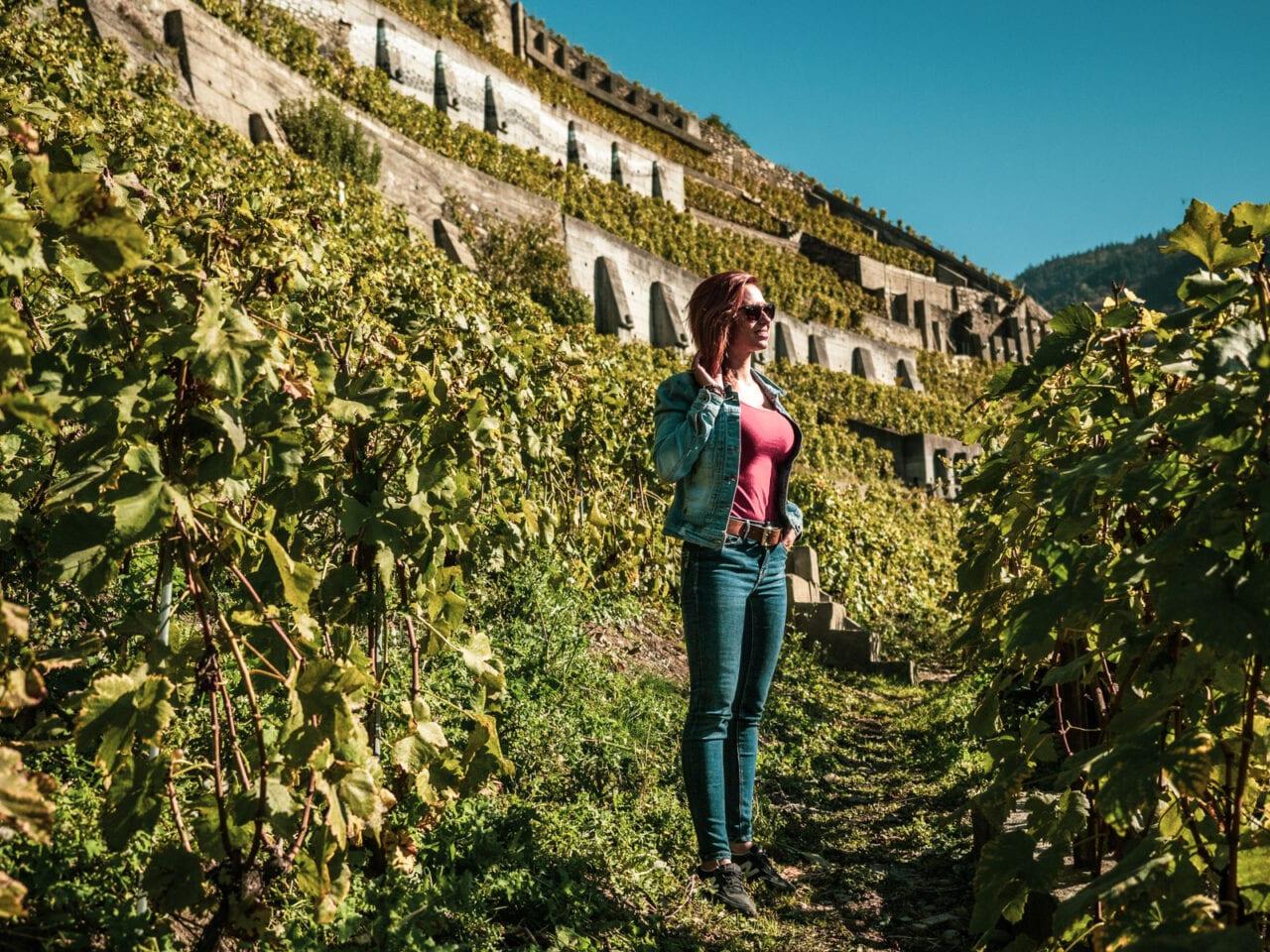 szwajcaria-ceny-winnice
