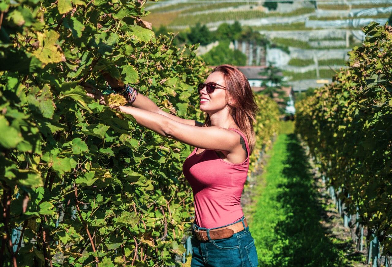 szwajcaria-winobranie