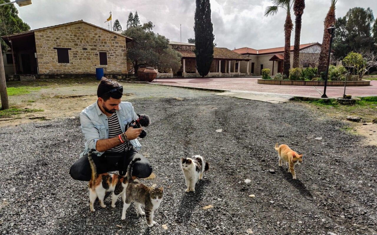 zwiedzanie-cypru-koty