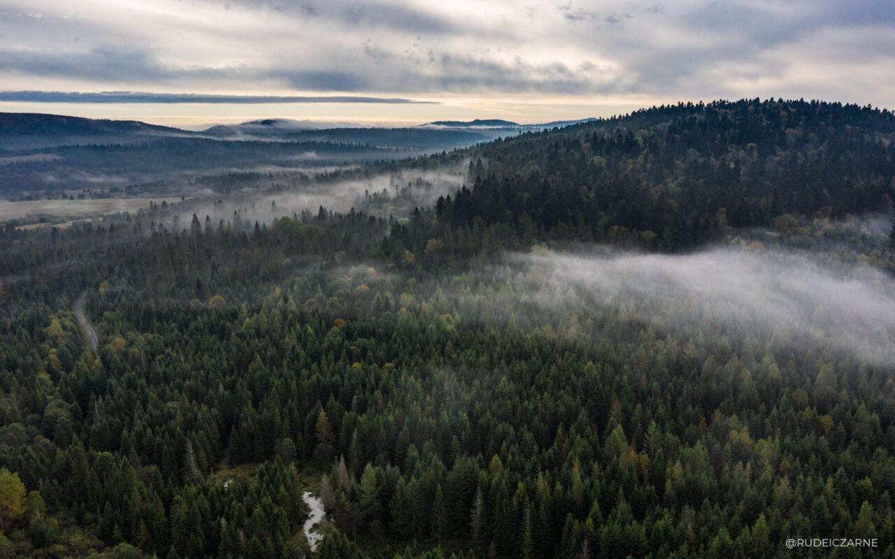 bieszczadzkie-lasy
